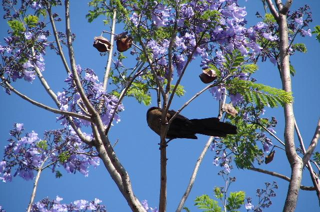 2006年3月16日から23日 グアテマラ ベリーズ メキシコ 221_00.jpg