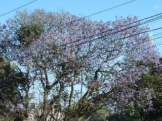 2006年3月16日から23日 グアテマラ ベリーズ メキシコ 261_00.jpg